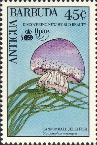 Cannonball jellyfish stamp