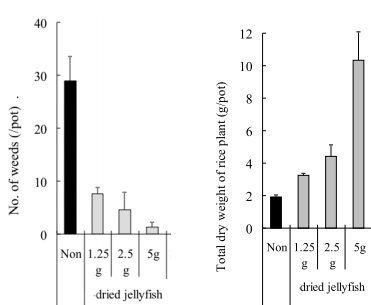 Effects of dried jellyfish on weed growth and rice mass