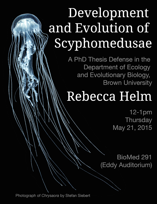 My PhD advisor, Casey Dunn, made the poster (he moonlights as a graphic artist, apparently!) Super talented postdoc Stefan Siebert took the photo (more of his pics here). And the jelly? That's one of mine! An Atlantic stinging nettle (Chrysaora quinquecirrha) I grew it up from a wee ephyra <3 And when the sciencing had scienced fully, this guy and his brothers flew to The Dallas Zoo and Children's Aquarium to go on display.