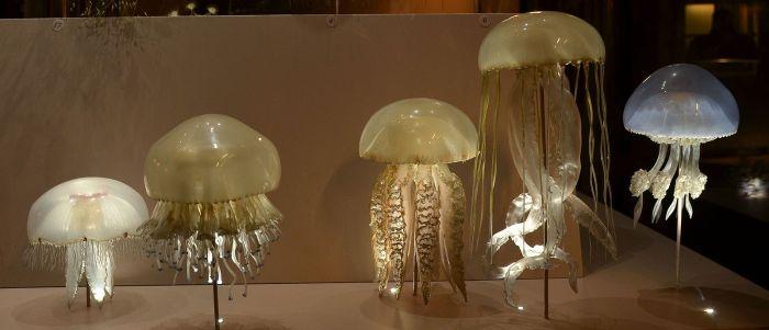 Museum_Histoire_Naturelle_Geneva_Blaschka_Scyphozoa_Jellyfish_21102014