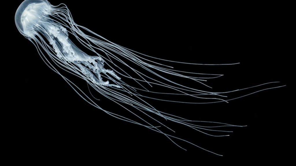 The Helm Lab Blog – Science, art, and jellyfish